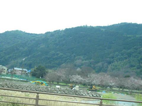 1・嵐山保津川サクラ1.JPG