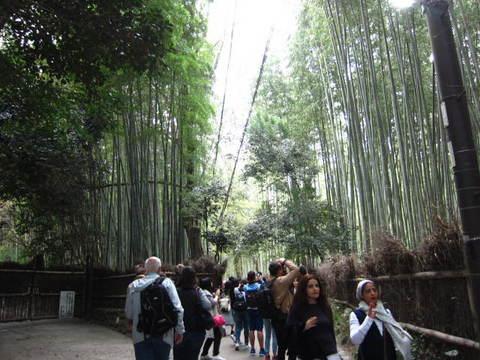 1・嵐山竹林.JPG