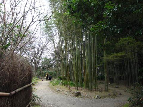 1・嵐山竹林・2.JPG