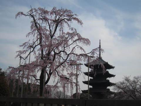1・東寺桜と五重塔.JPG