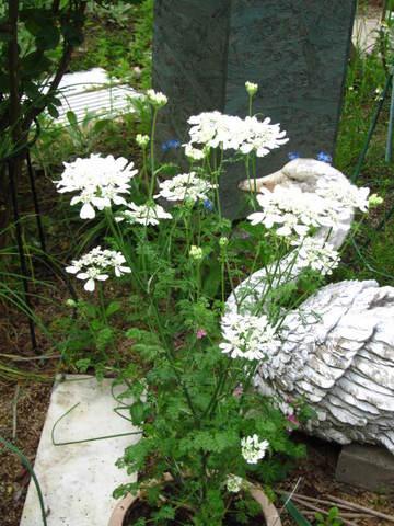 25白い花.JPG