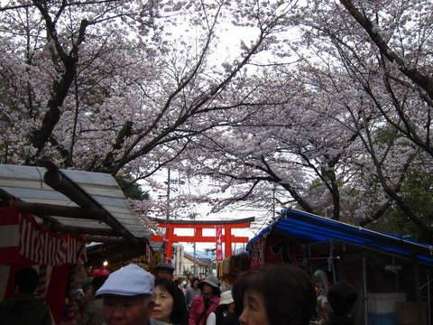 2・平野神社1.JPG