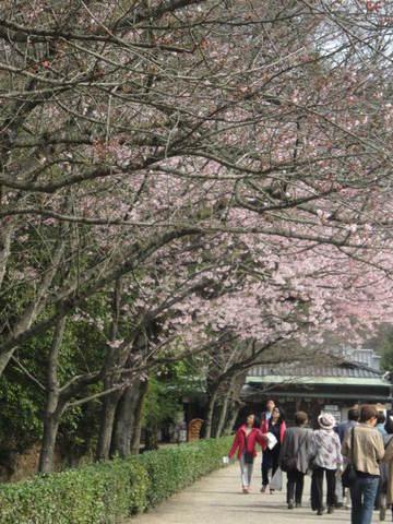 2・栗林公園桜2.JPG