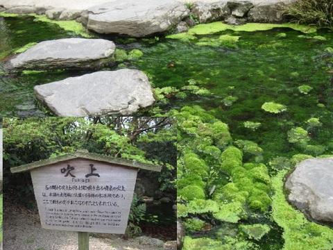 2・栗林公園湧水4.JPG