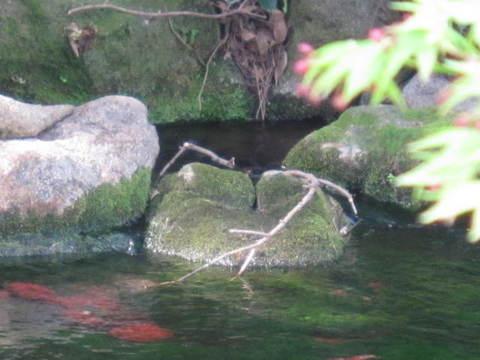 2・栗林公園湧水5.JPG