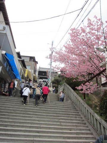 2・金毘羅石段と桜.JPG