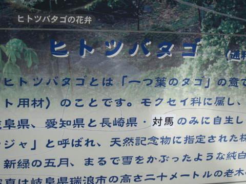 ヒトツバタゴ標.JPG