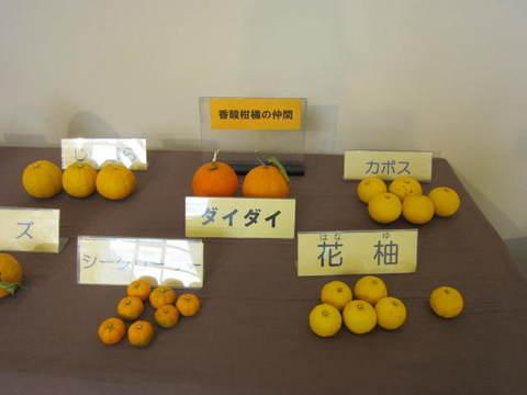 ミカン種類・7.JPG