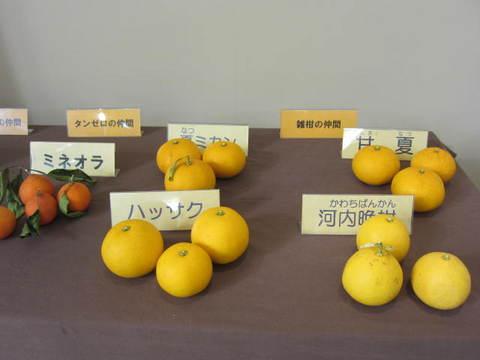 ミカン種類・9.JPG