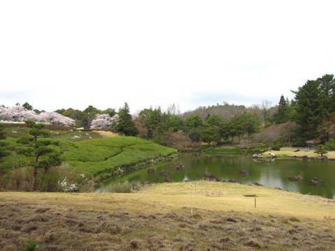 ユキヤナギ・池1.JPG
