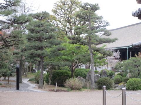 三十三間堂の庭・1.JPG