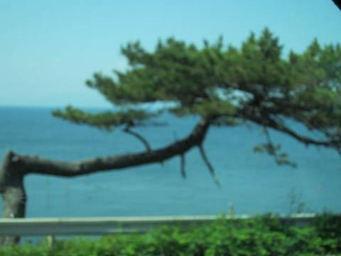 伊良湖海.JPG