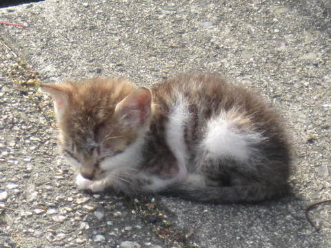 子猫・2.JPG