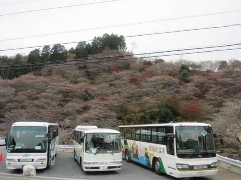 小原の桜1.JPG