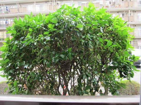 庭の木.JPG