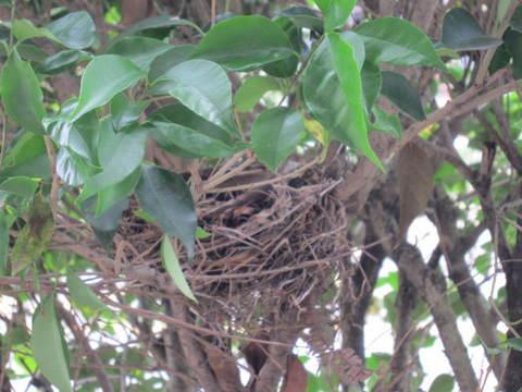 庭の木・巣1.JPG