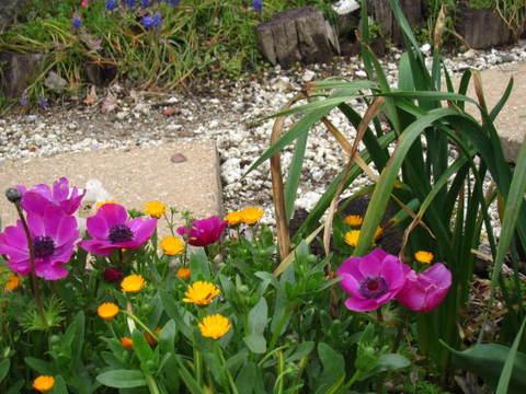 旭の花壇・1.JPG