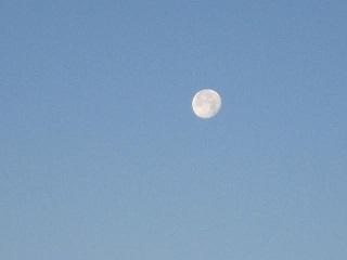 月・2.JPG