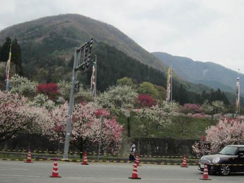 月川山と花桃・2.JPG