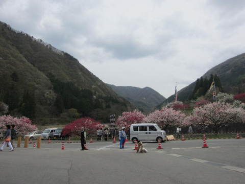 月川山と花桃・3.JPG