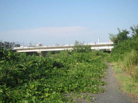 本地橋と草群.JPG