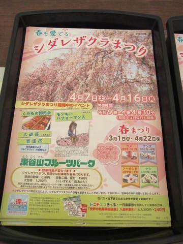 東谷山桜まつり.JPG