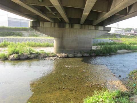 矢田川・橋の下.JPG