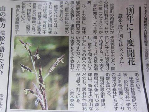 竹の花開花.JPG