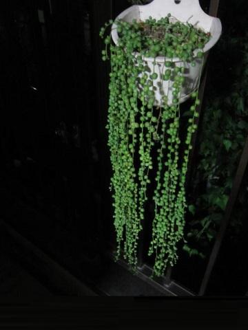 緑の鈴・1.JPG