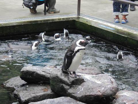花鳥園ペンギン.JPG