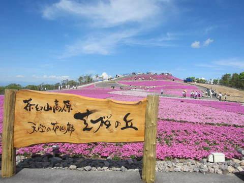 茶臼山・芝桜7.JPG