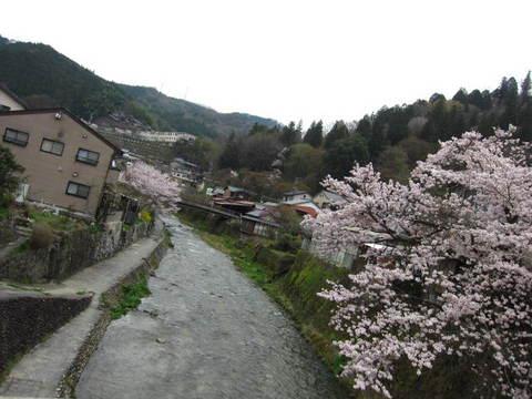 足助の桜・2.JPG