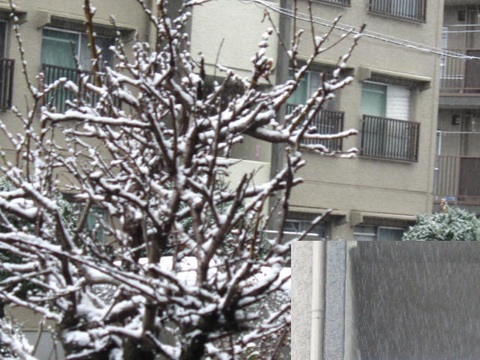 雪・3.JPG