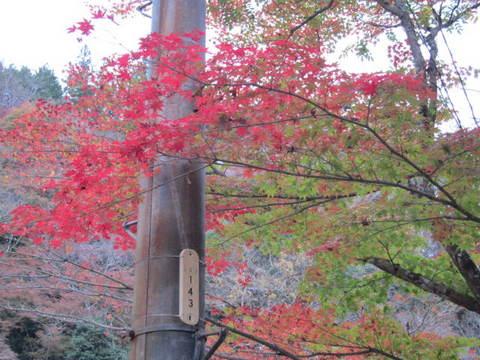香嵐渓紅葉5.JPG
