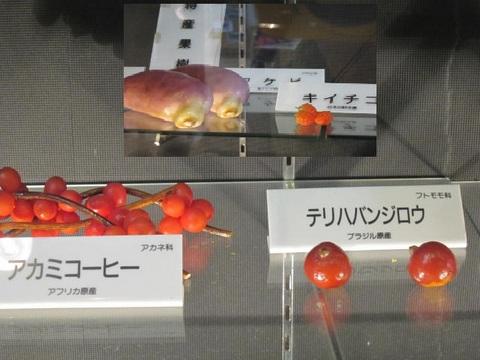 1・アカミコーヒー・テリハバンジロウ.JPG