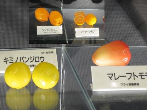 1・キミノバンジロウ・マレーフトモモ.JPG