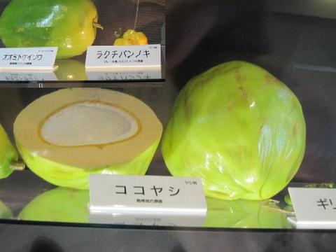 1・ココヤシ.JPG
