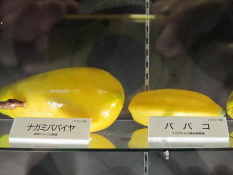 1・ナガミパパイヤ・ババコ.JPG