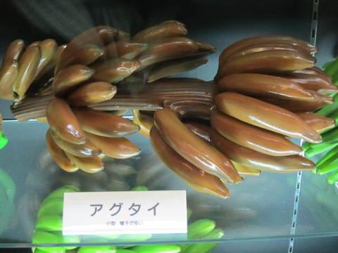 1・バナナ・アグタイ.JPG