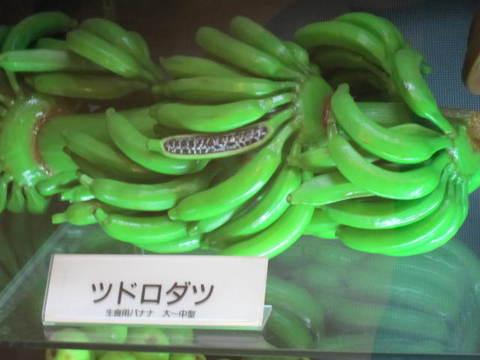 1・バナナ・ツドロダツ.JPG