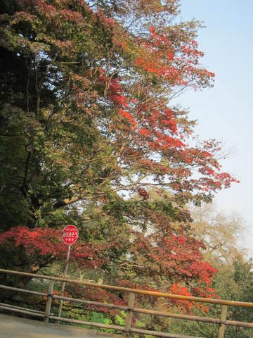 1・中尊寺の紅葉2.JPG