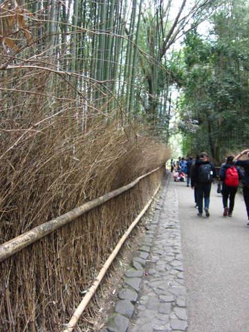 1・嵐山竹林・1.JPG