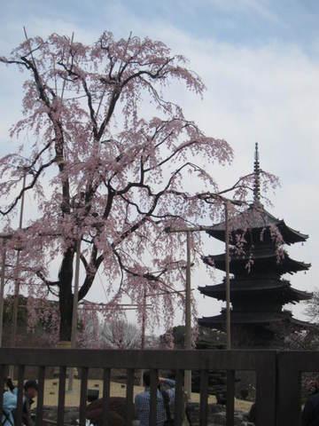 1・東寺五重塔.JPG