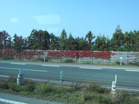 1・高速道路赤いツタ.JPG