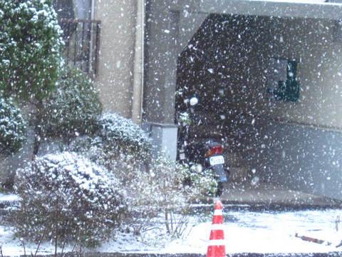 15日雪・5.JPG