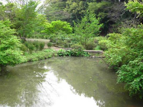 2・つくばボタン園池1.JPG