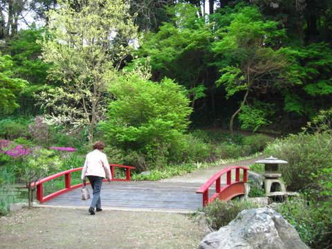 2・つくばボタン園赤い橋.JPG