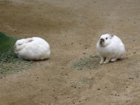 2・動物園兎.JPG