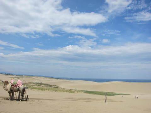 2・5砂丘とラク1ダ.JPG