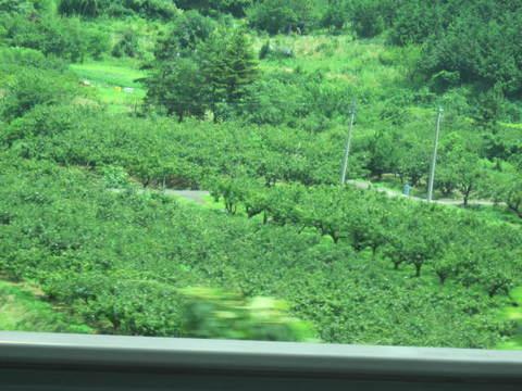 2・8鳥取界隈梨畑.JPG